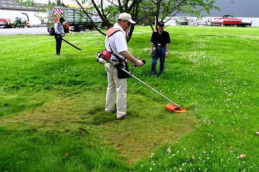 dịch vụ cắt tỉa cỏ hoang giá rẻ uy tín